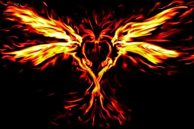 Image of two firebirds creating a heart